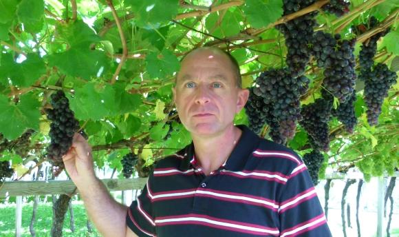 Dolomity -winogrona