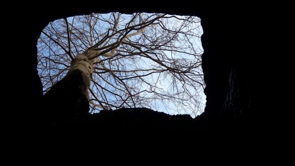06.Sztolnia - drzewo