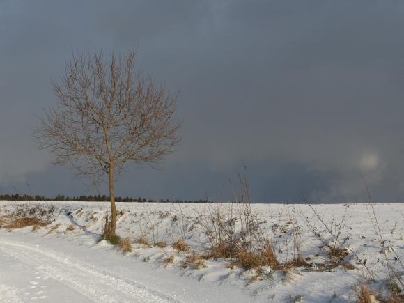 Drzewko na śniegu