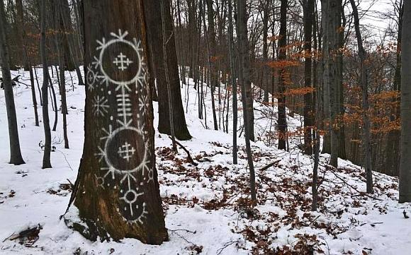 00. Znaki na drzewie